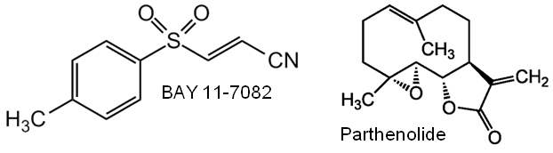 BAY 11-7082 and Pathenolide Structure