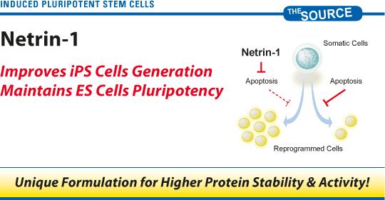 Netrin-1 - Generation of iPSC